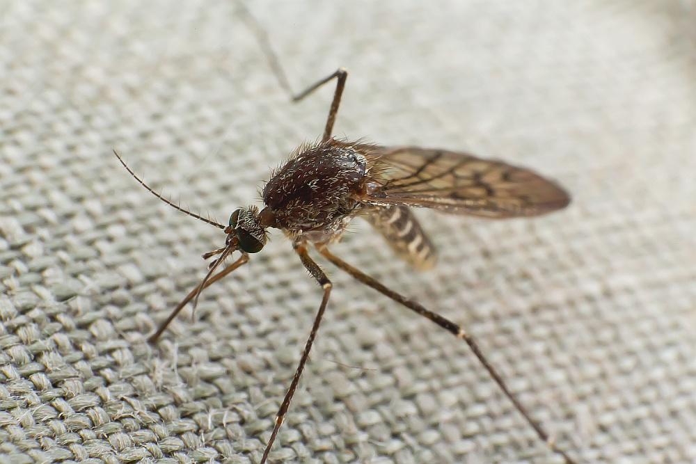 Co odstrasza komary